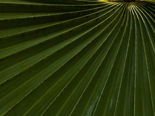 Sustainability News Round-up: May