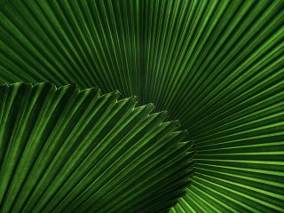 Sustainability News Round-up: June