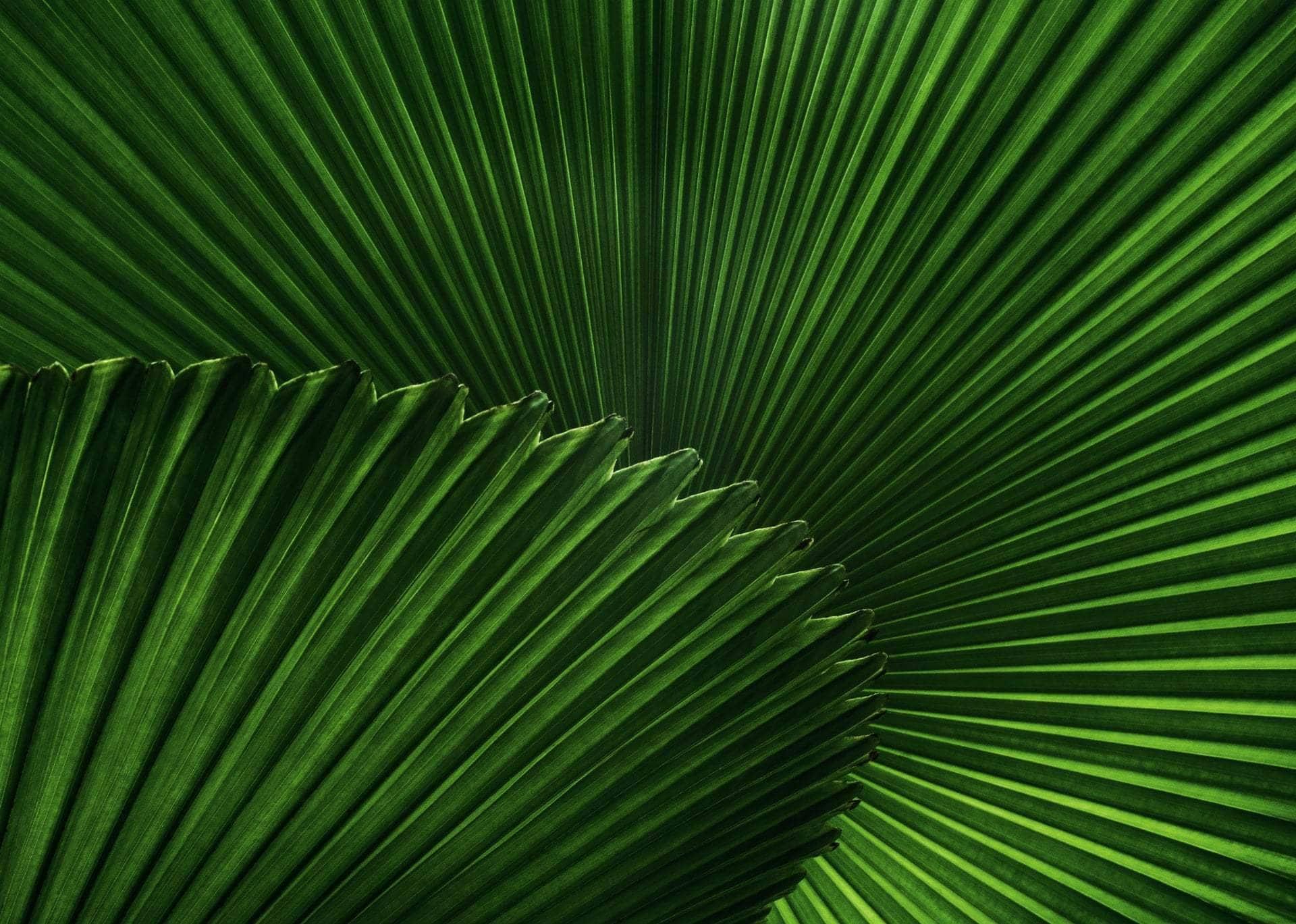 Sustainability News Round-up - June