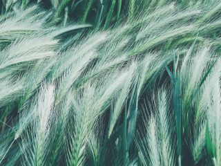 Sustainability News Round-up: September